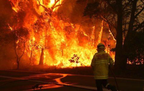 Australia's Devastating Wildfires Spreads Fiercely