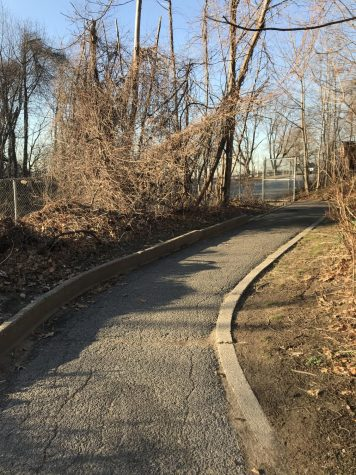 A snowless path behind North Middle School this February.